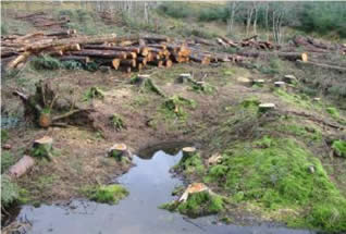 Mechanically stacked felled trunks adjacent to Fulacht Fiadh (Site 10 viewed from northwest)